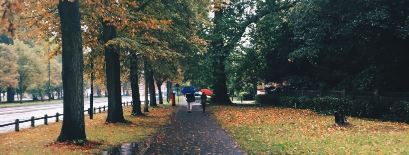 A rainy pavement lined by trees, orange leaves in autumn