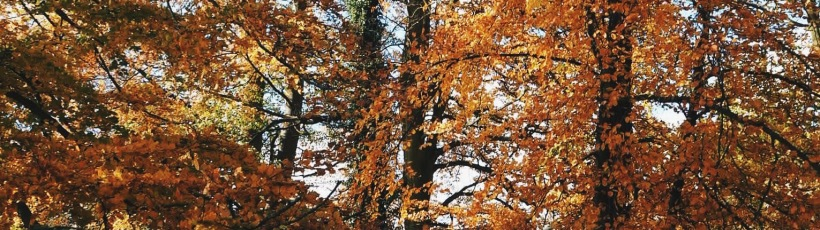 A wood of golden leaved-trees