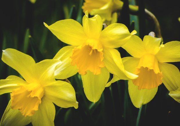 beautiful-bloom-blooming-1250383