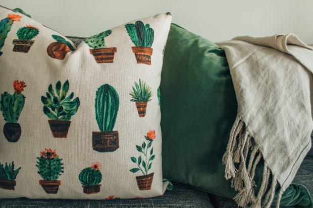 blanket-cacti-cactus-1248586