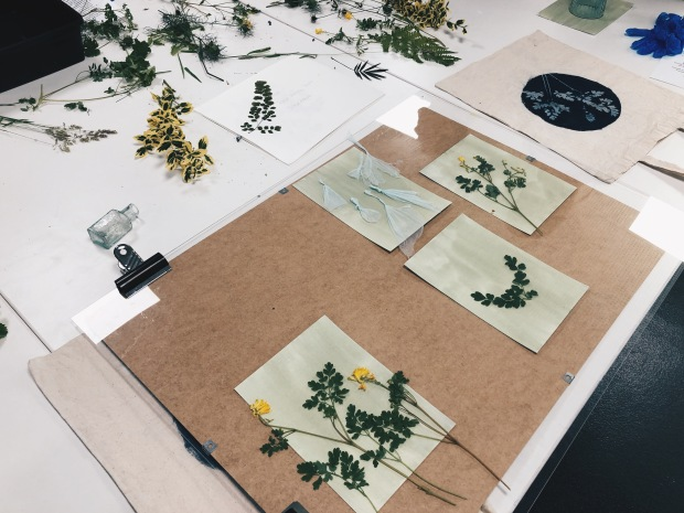 dried plants on paper, set out for the cyanotype workshop