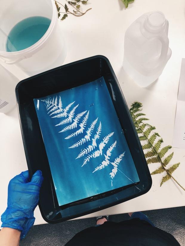 Developing a cyanotype print