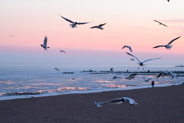 seagulls flying against a sunset