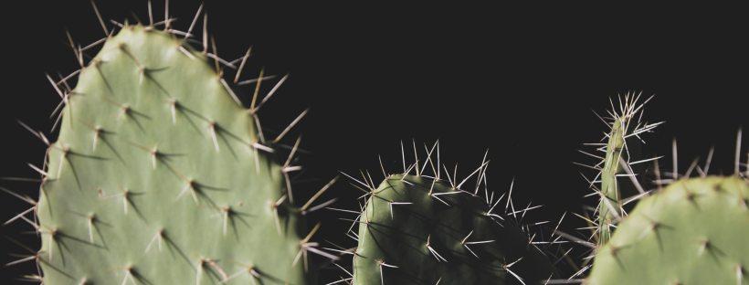 sharp spiky cacti against a black background