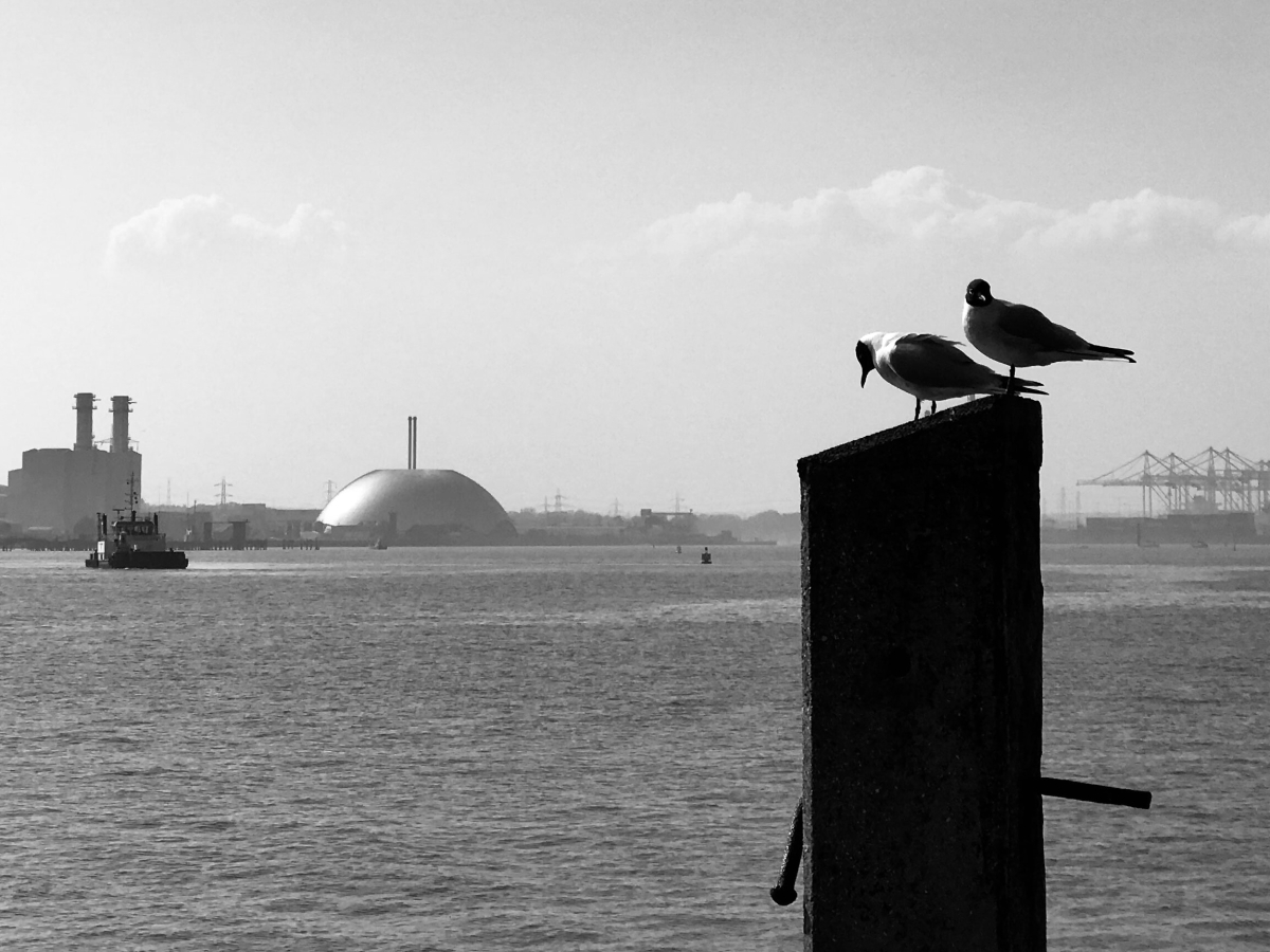 A black and white photo of two seagulls perched on a post, with a seascape behind them. you can see the cranes in the port, and a boart.